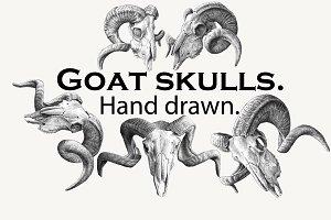 Goat skulls. Hand drawn.