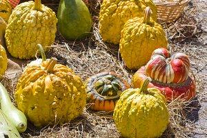 halloween pumpkins market