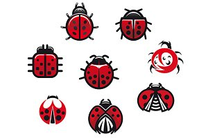 Ladybugs and ladybirds