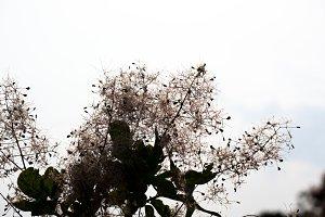 Silhouette of flower