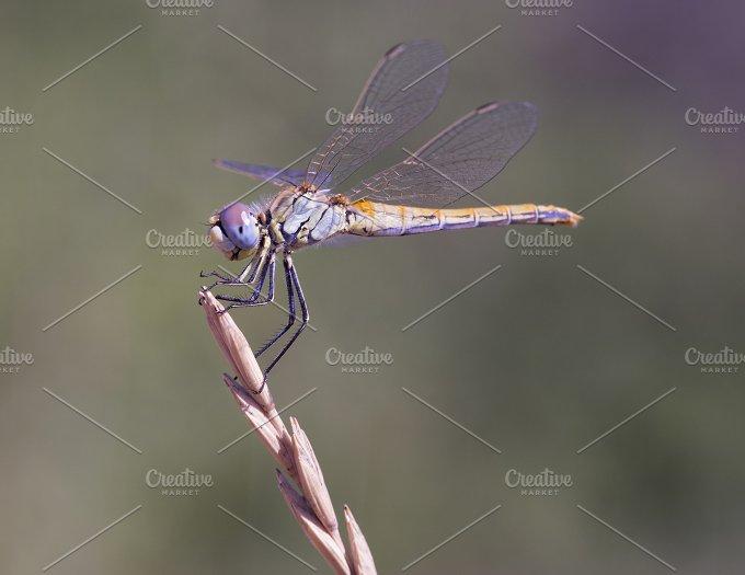 dragonfly.jpg - Photos
