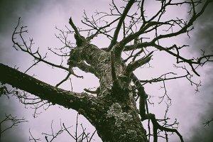 Chromatic Tree
