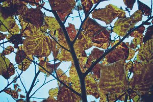 Vintage Foliage