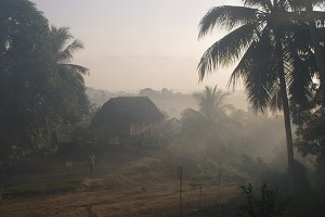 Dawn in the jungle