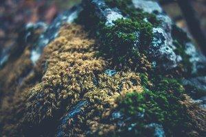 Fuzzy Moss