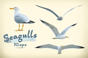 Seagulls vector icons