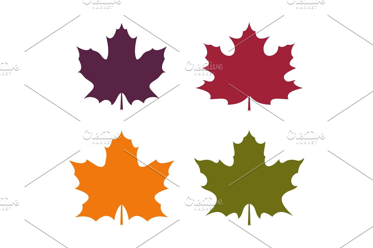 Colorful leaves of canadian maple.