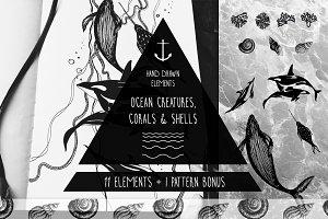 Ocean creatures, shells & corals