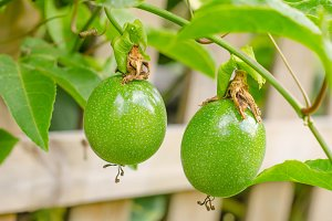 Closeup of passion fruit.