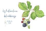 Watercolour Blackberry