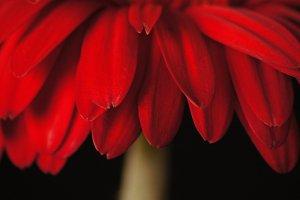 Floral Portrait #2