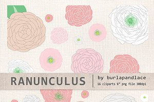 Ranunculus (vector) flower clipart