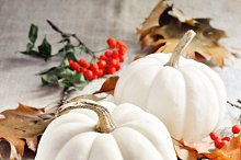 Pumpkins or white gourds