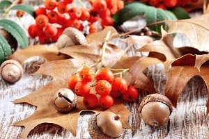 Autumn falling leaves & acorns