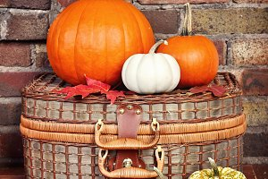 Pumpkins. Gourds. Autumn decoration