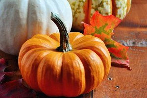 Pumpkins. Gourds. Autumn decoration.