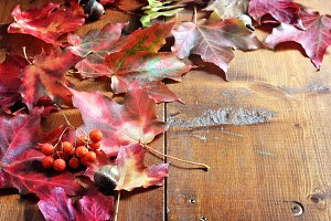 Autumn leaves, background