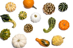 Thanksgiving Fall Pumpkin Gord #89