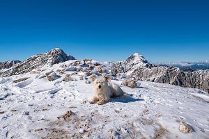 Small white dog at the top