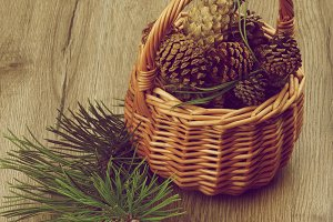 Fir Cones and Branches