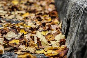 Fallen leaves on the sidewalk II