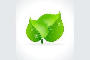 Glossy Green Detailed Leaves. Vector
