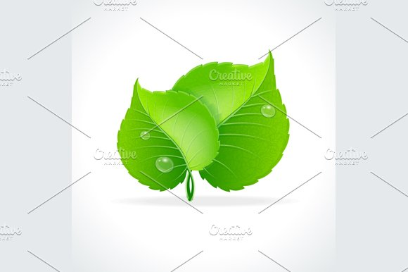 Glossy Green Detailed Leaves. Vector - Objects
