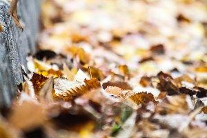 Fallen leaves on the sidewalk III