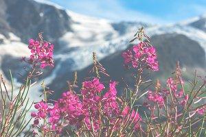 Swiss Apls mountains in summer