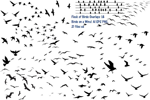 Flock of Birds Overlay AI EPS PNG