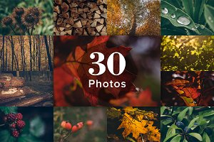 30 Autumn Photos - Forest and Plants