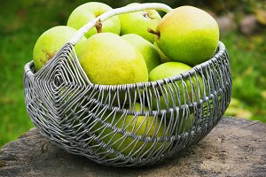 Wicker basket of ripe pears  outdoors