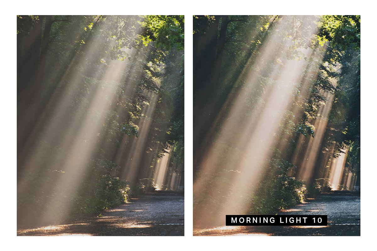 50 Forest Lightroom Presets and LUTs