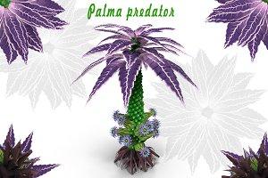 Palma predator