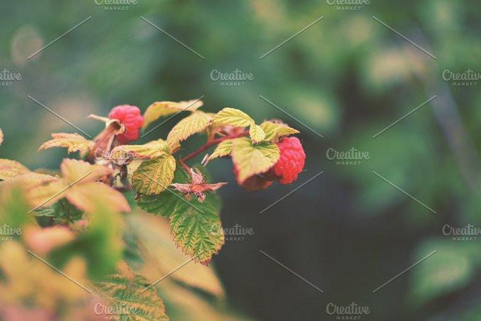 3lines_rasberries.jpg - Nature