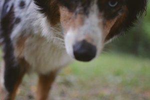 3lines_dog.jpg