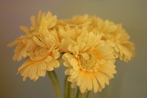 Cream Colored Flowers