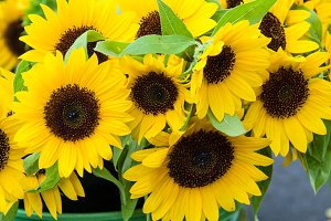 Bouquet of yellow sunflowers