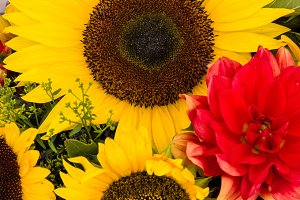 Sunflowers and red Dahlia