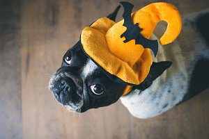 Dog in disguise for Halloween
