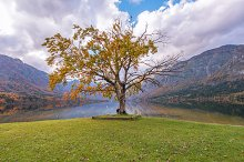 Hiker by the autumn tree