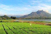 Landscape with onion fields, Bali