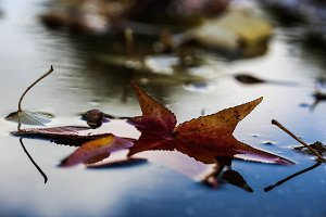 Dead leaves, reflections