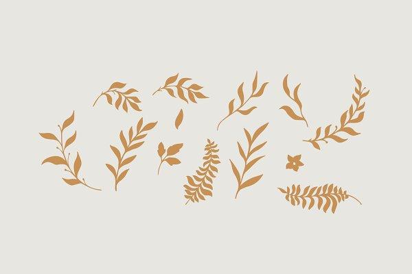 Best Rosinweed Font  ( + Bonus Leaves ) Vector