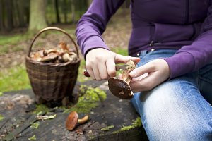 Women cleaning mushroom after Pickin