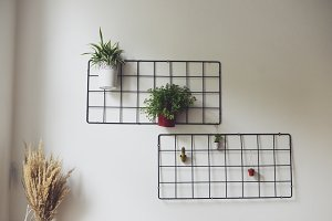 Beautiful wall decor with plants