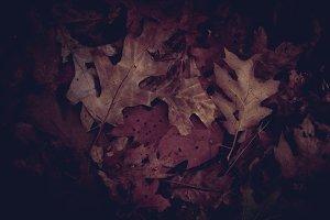 Luxury Leaves