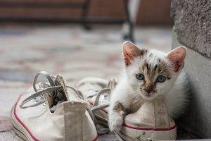 Kitty in chucks
