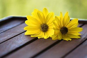 yellow daisies cut tray