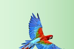 Flying  parrot. Colorful vector.